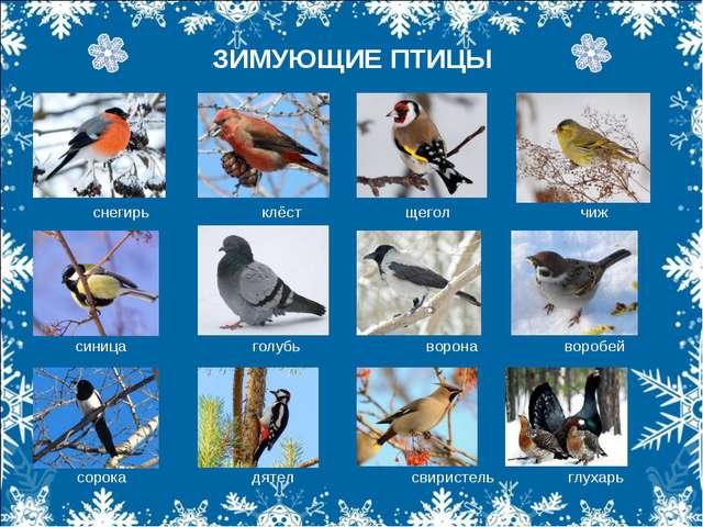 ЗИМУЮЩИЕ ПТИЦЫ снегирь клёст щегол чиж снегирь клёст щегол чиж синица голубь...
