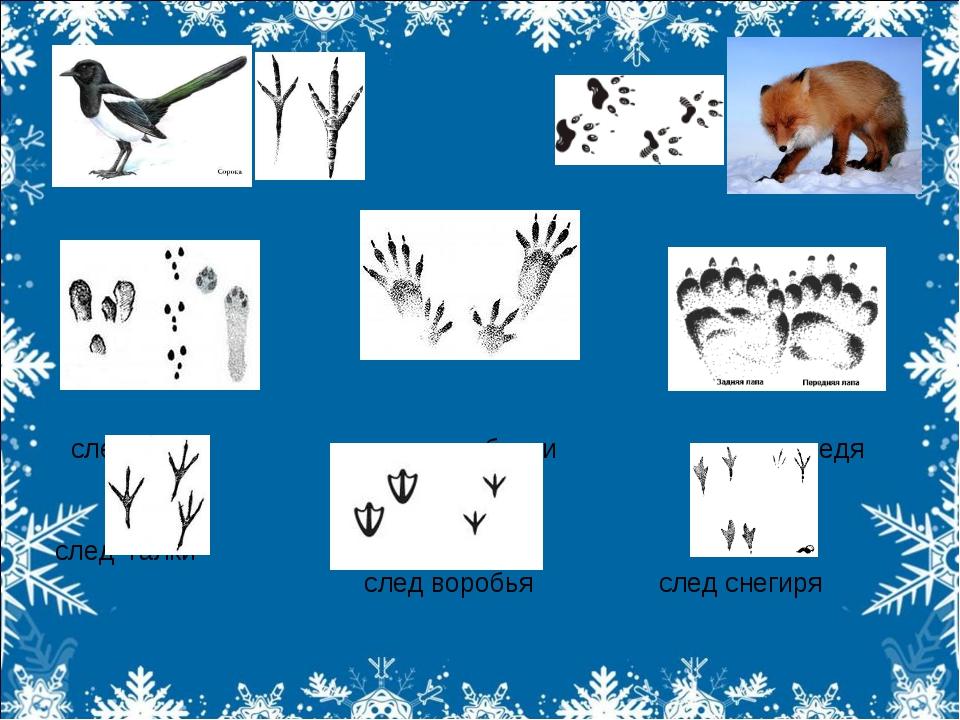 след зайца след белки след медведя след галки след воробья след снегиря