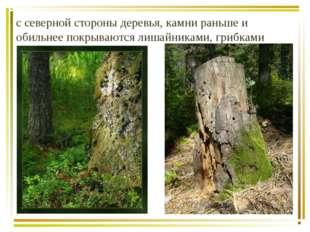 с северной стороны деревья, камни раньше и обильнее покрываются лишайниками,