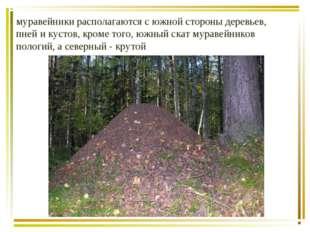 муравейники располагаются с южной стороны деревьев, пней и кустов, кроме того