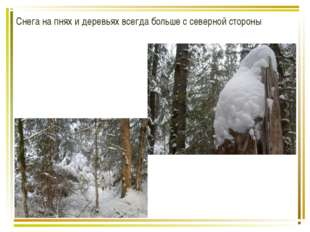 Снега на пнях и деревьях всегда больше с северной стороны
