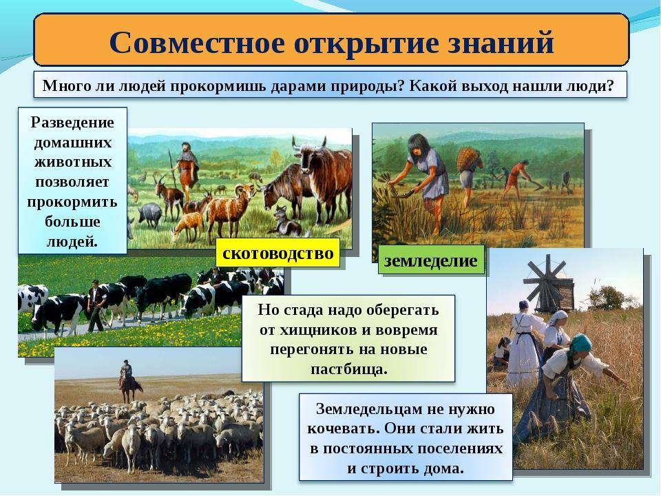 Совместное открытие знаний скотоводство земледелие