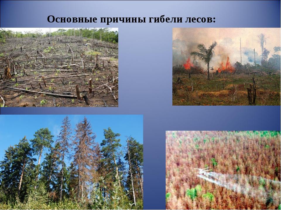 Основные причины гибели лесов: