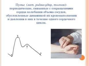 Пульс (лат. pulsus удар, толчок)- периодические, связанные с сокращениями сер