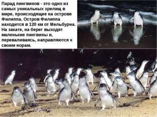 Парад пингвинов - это одно из самых уникальных зрелищ в мире, происходящее на
