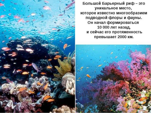 Большой Барьерный риф – это уникальное место, которое известно многообразием...