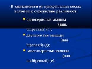 В зависимости отприкреплениякосых волокон к сухожилию различают: одноперист