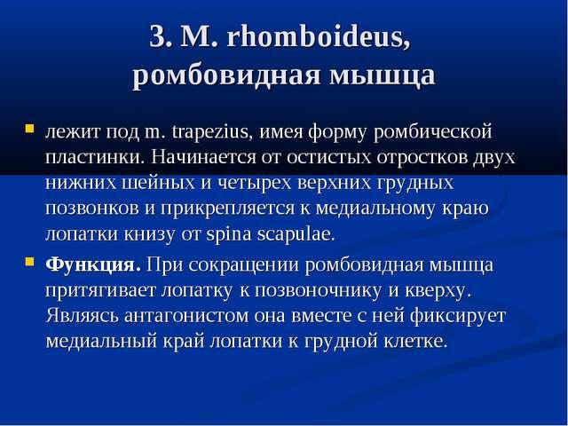 3. М. rhomboideus, ромбовидная мышца лежит под m. trapezius, имея форму ромби...