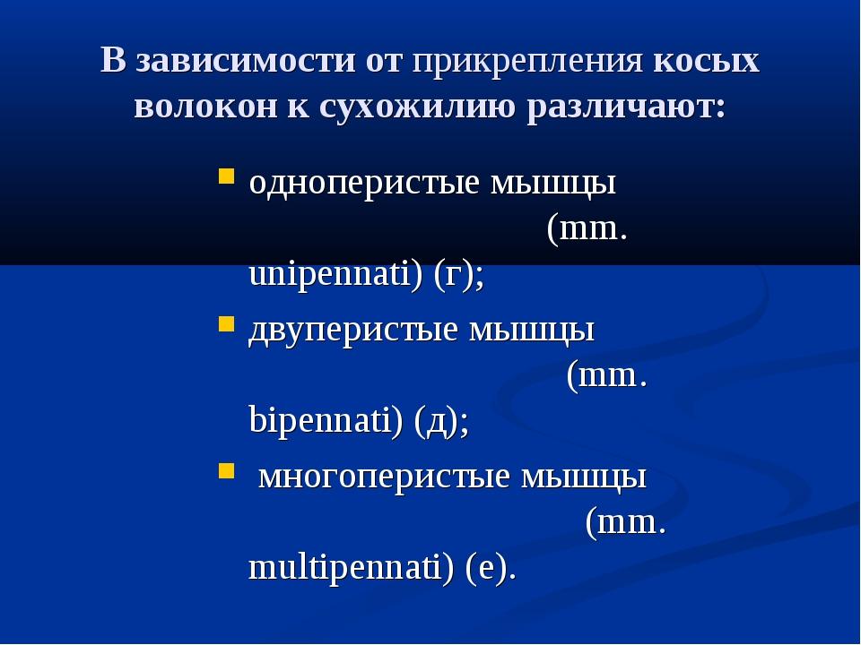 В зависимости отприкреплениякосых волокон к сухожилию различают: одноперист...