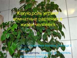 Какую роль играют комнатные растения в жизни человека Автор: Чуваткина Милана