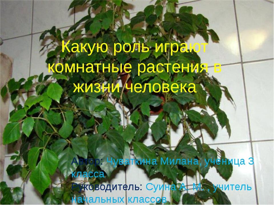 Какую роль играют комнатные растения в жизни человека Автор: Чуваткина Милана...