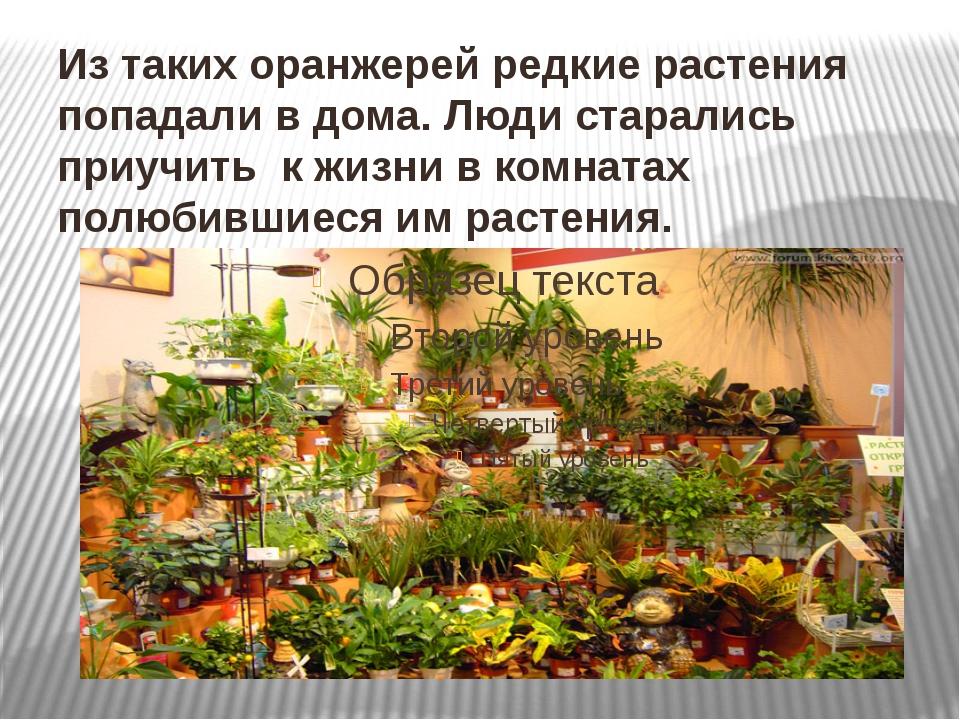 Из таких оранжерей редкие растения попадали в дома. Люди старались приучить к...