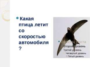 Какая птица летит со скоростью автомобиля?