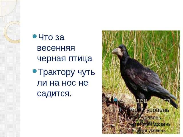 Что за весенняя черная птица Трактору чуть ли на нос не садится.
