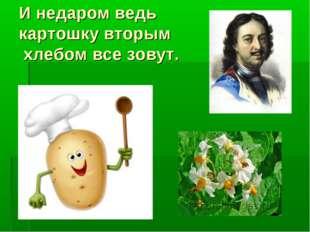 И недаром ведь картошку вторым хлебом все зовут.