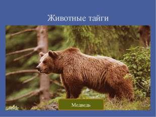 Животные тайги Медведь
