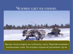 Человек едет на оленях. Быстро мчатся нарты по глубокому снегу. Нартами назы