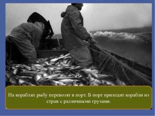 На кораблях рыбу перевозят в порт. В порт приходят корабли из стран с различ