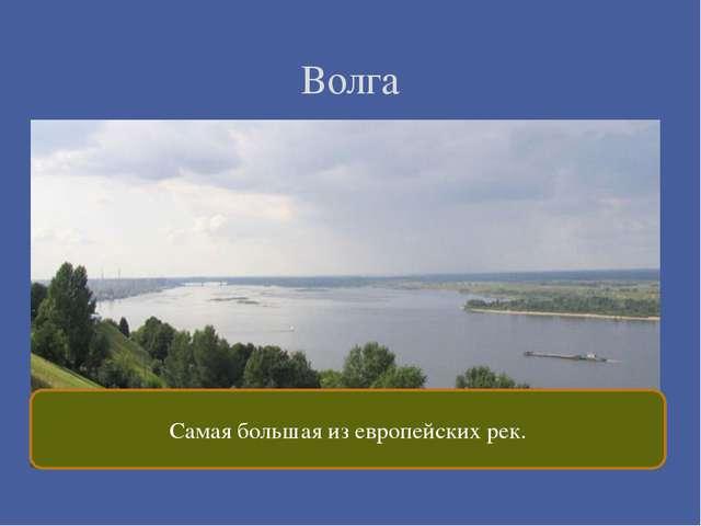 Волга Самая большая из европейских рек.