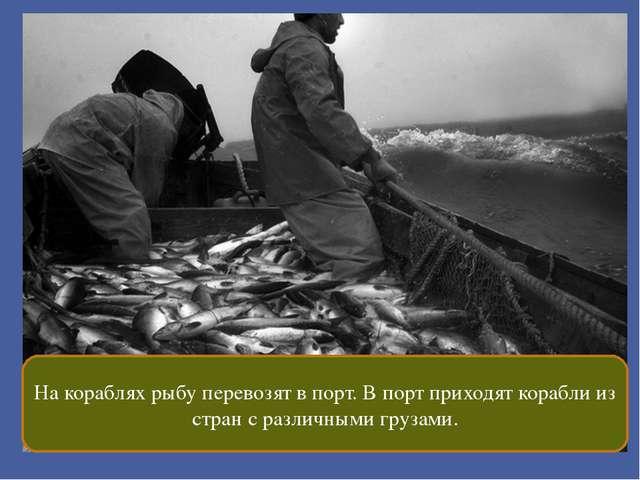 На кораблях рыбу перевозят в порт. В порт приходят корабли из стран с различ...