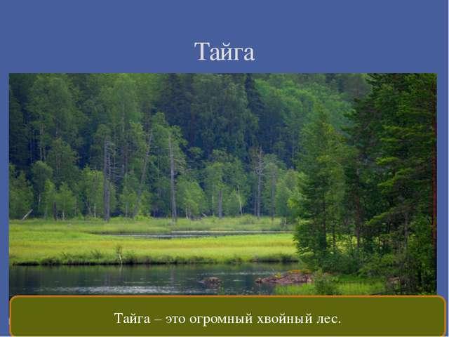 Тайга Тайга – это огромный хвойный лес.