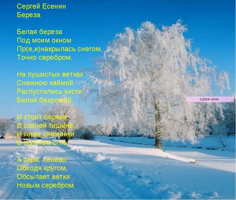 Сергей Есенин Береза Белая береза Под моим окном Пр(е,и)накрылась снегом, Точ...