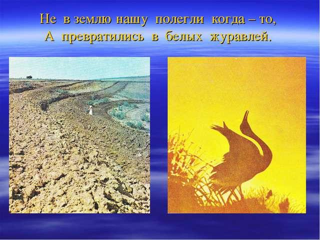 Не в землю нашу полегли когда – то, А превратились в белых журавлей.
