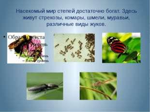 Насекомый мир степей достаточно богат. Здесь живут стрекозы, комары, шмели, м