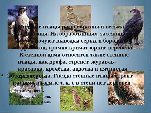 Степные птицы разнообразны и весьма осторожны. На обработанных, засеянных пол...