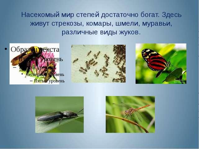 Насекомый мир степей достаточно богат. Здесь живут стрекозы, комары, шмели, м...