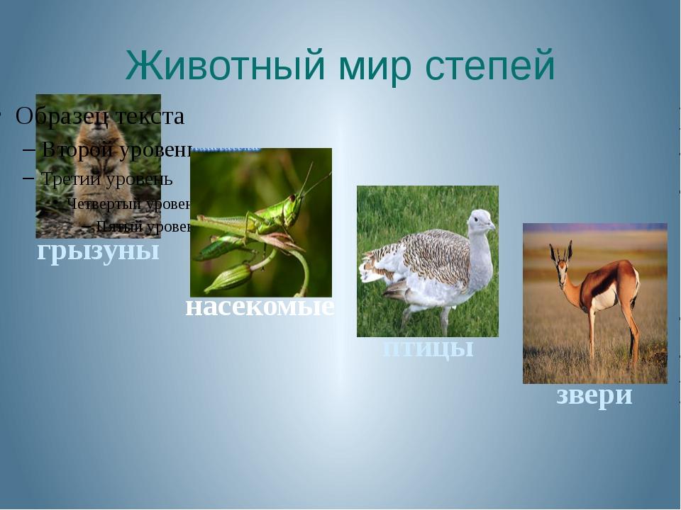 Животный мир степей насекомые птицы звери грызуны