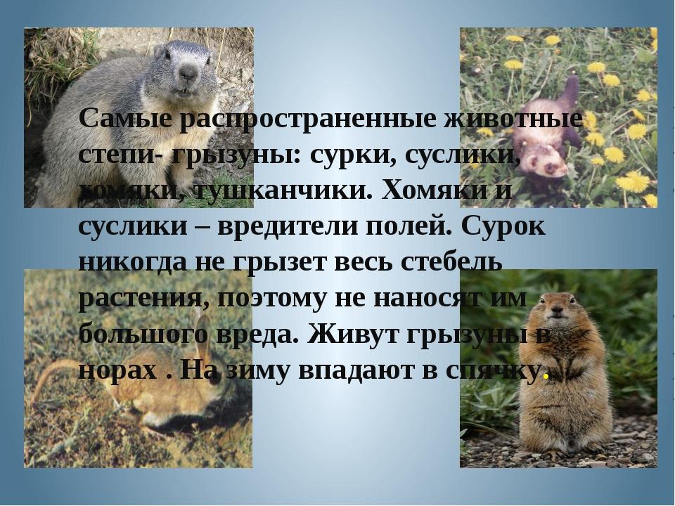 Самые распространенные животные степи- грызуны: сурки, суслики, хомяки, тушка...