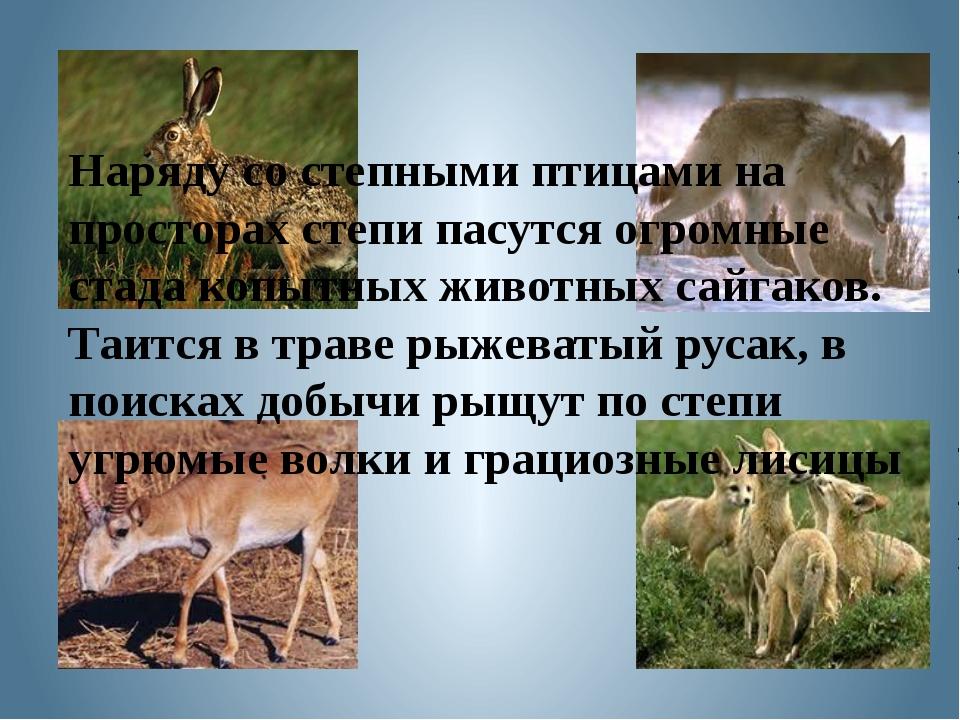 Наряду со степными птицами на просторах степи пасутся огромные стада копытных...
