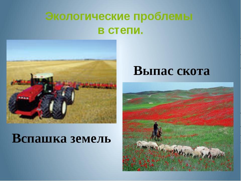 Экологические проблемы в степи. Выпас скота Вспашка земель