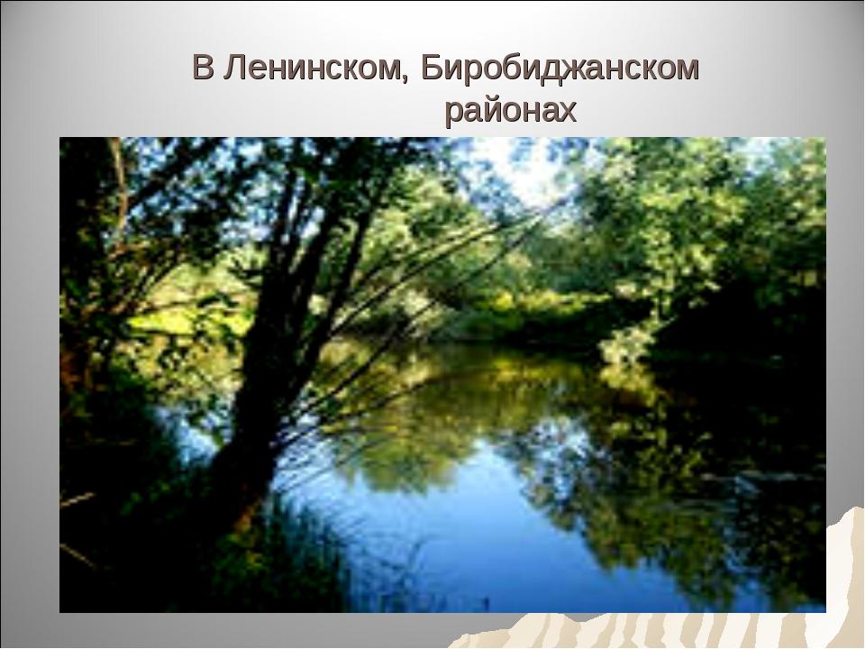 В Ленинском, Биробиджанском районах