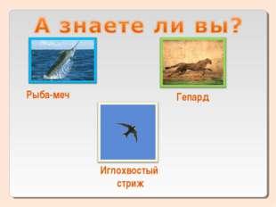 Рыба-меч Гепард Иглохвостый стриж
