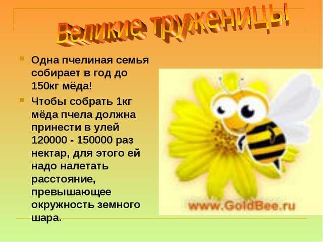 Одна пчелиная семья собирает в год до 150кг мёда! Чтобы собрать 1кг мёда пчел...