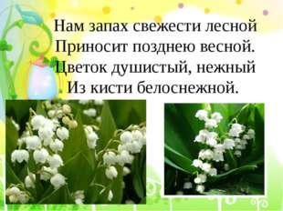 Нам запах свежести лесной Приносит позднею весной. Цветок душистый, нежный Из
