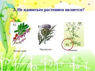 2. Не ядовитым растением является? Волчье лыко Чертополох Ромашка А) Б) В)