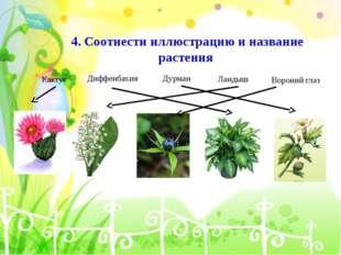 4. Соотнести иллюстрацию и название растения Кактус Диффенбахия Дурман Ландыш