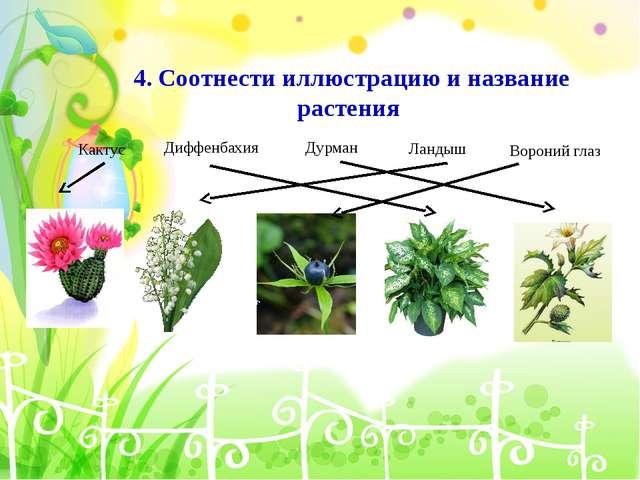 4. Соотнести иллюстрацию и название растения Кактус Диффенбахия Дурман Ландыш...