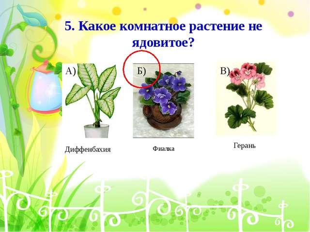 А) Диффенбахия В) Герань 5. Какое комнатное растение не ядовитое? Б) Фиалка