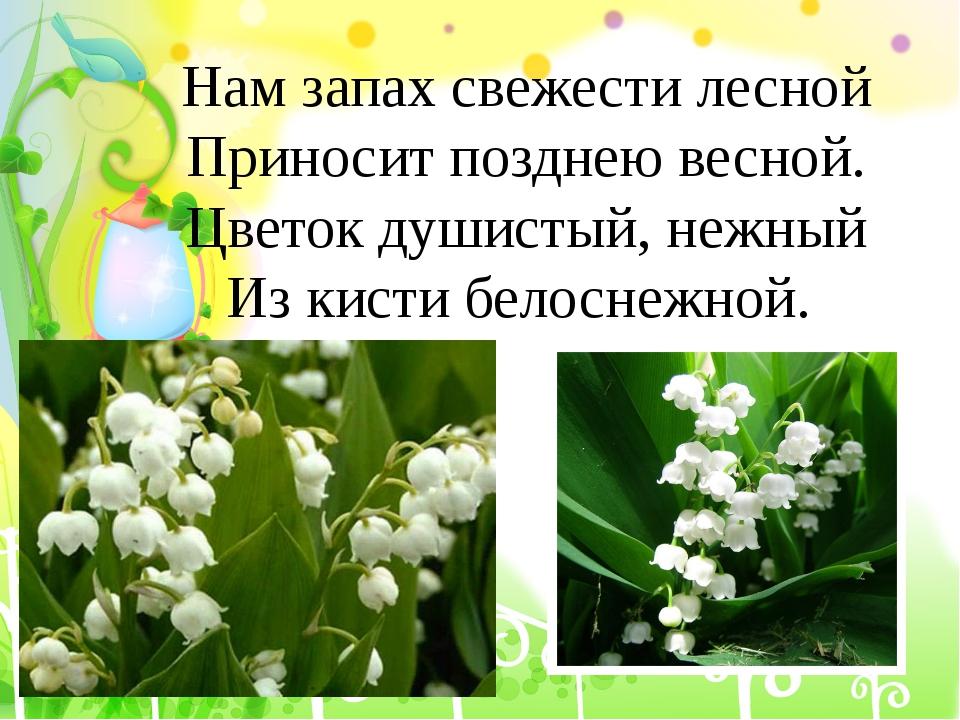 Нам запах свежести лесной Приносит позднею весной. Цветок душистый, нежный Из...
