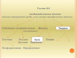 Схема 6.2  соединительные ткани (ткани внутренней среды, или опорно-трофиче