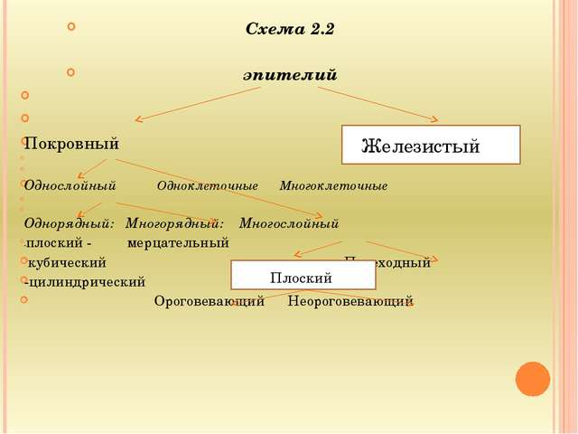 Схема 2.2 эпителий   Покровный   Однослойный Одноклеточные Много...