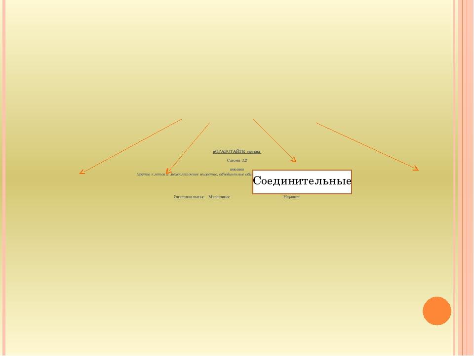 дОРАБОТАЙТЕ схемы Схема 1.2 ткани (группа клеток и межклеточное вещество, объ...