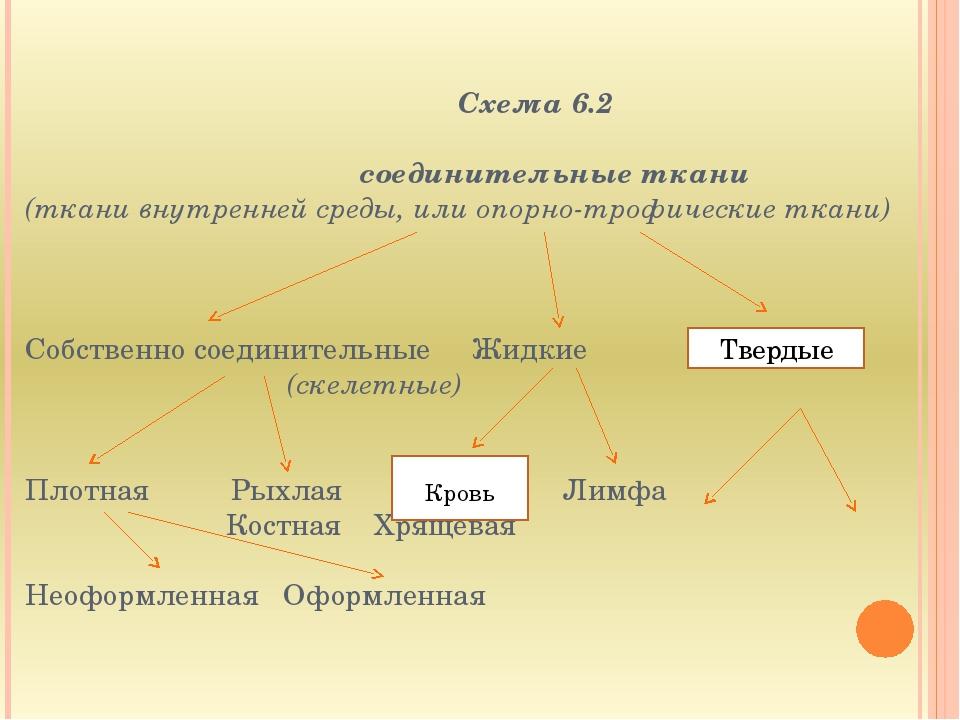 Схема 6.2  соединительные ткани (ткани внутренней среды, или опорно-трофиче...