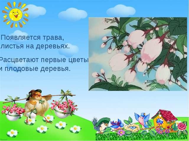 Появляется трава, листья на деревьях. Расцветают первые цветы и плодовые дере...