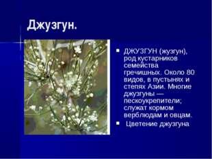 Джузгун. ДЖУЗГУН (жузгун), род кустарников семейства гречишных. Около 80 видо