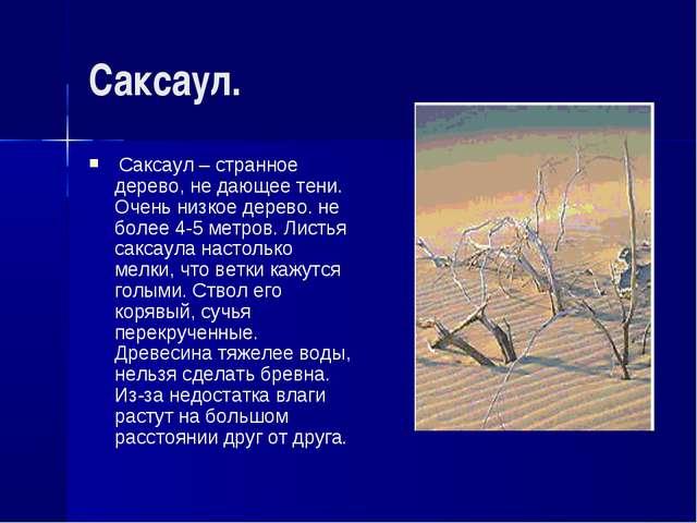 Саксаул. Саксаул – странное дерево, не дающее тени. Очень низкое дерево. не б...